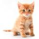 Kitten Club